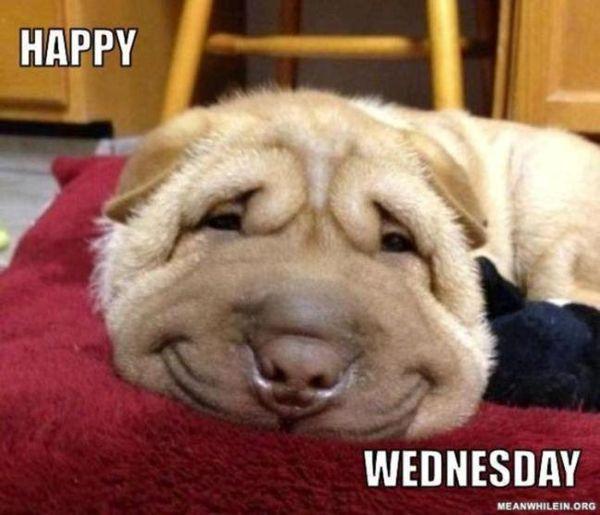 Funny-wednesday-memes-4